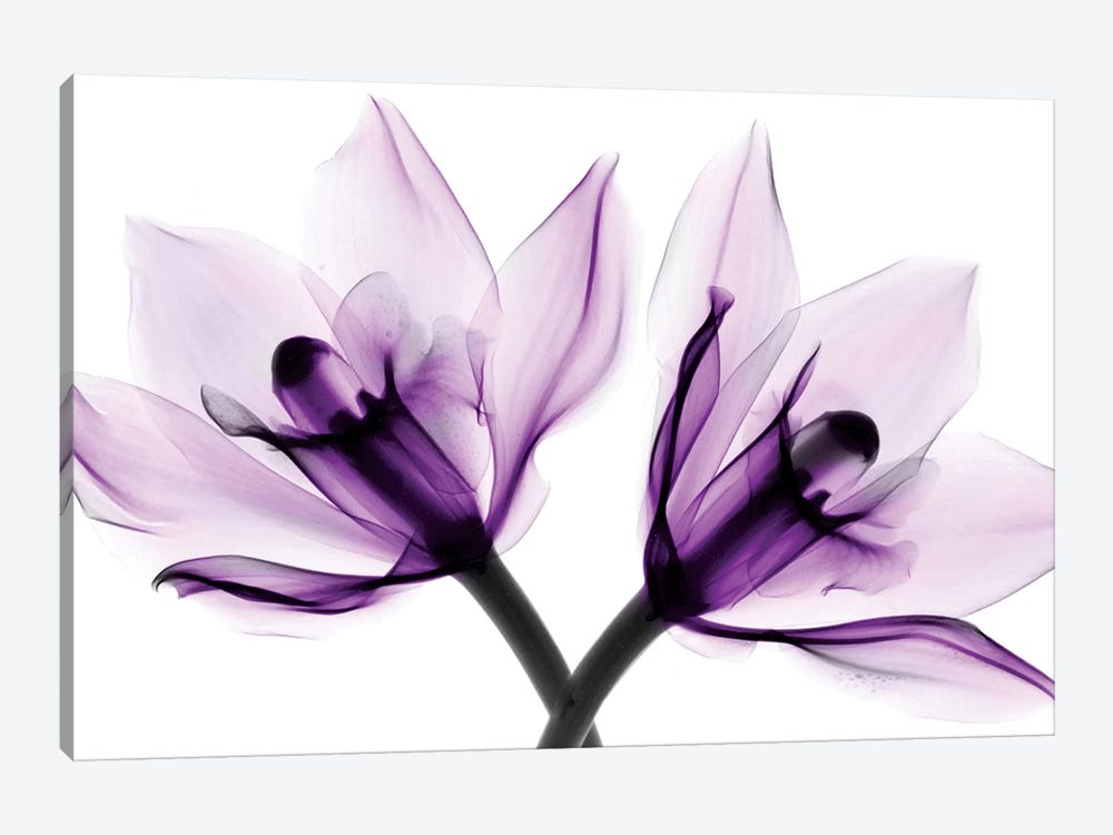 Orchids I by Hong Pham 1-piece Canvas Art Print