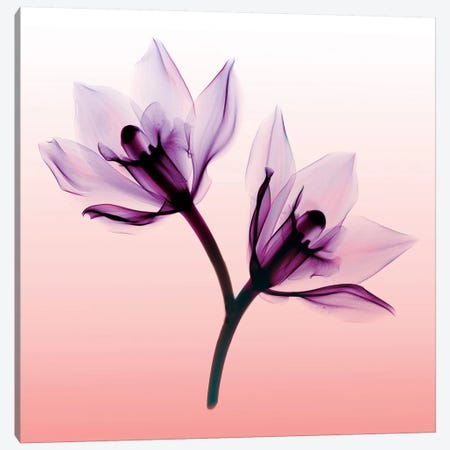 Orchids II Canvas Print #HPH12} by Hong Pham Canvas Artwork