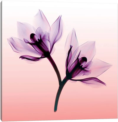 Orchids II Canvas Art Print