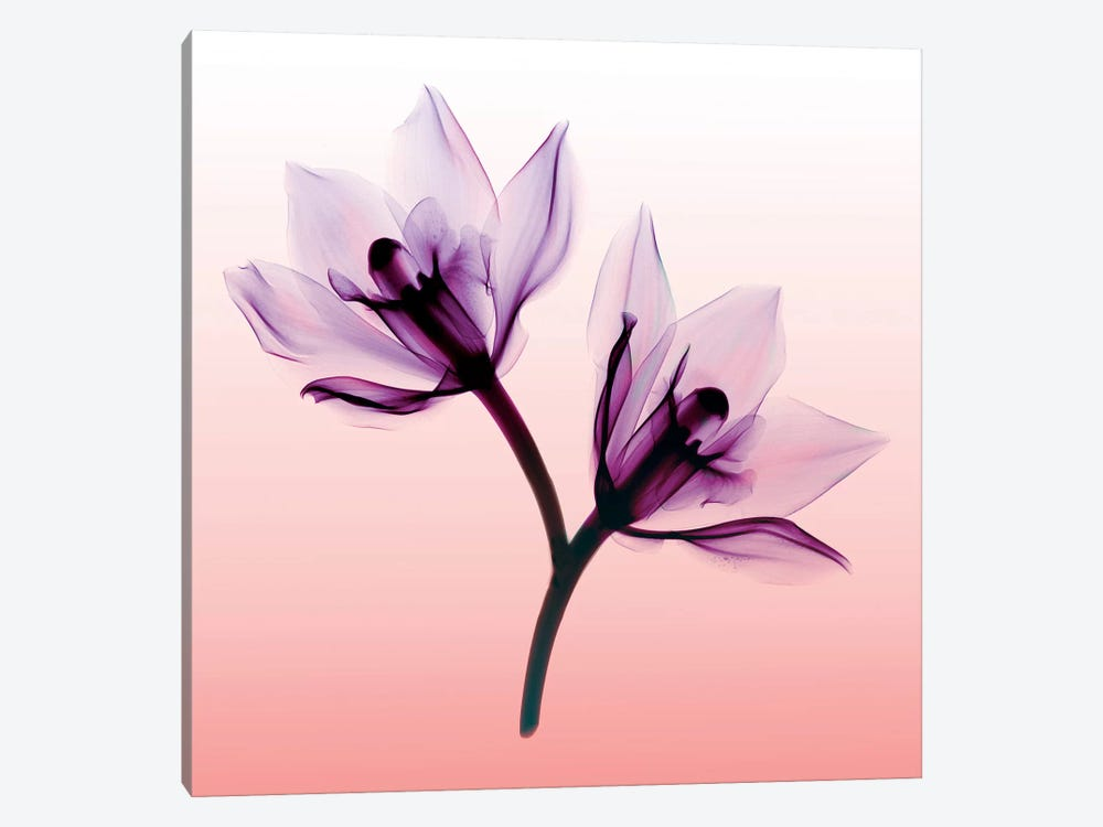 Orchids II by Hong Pham 1-piece Canvas Wall Art