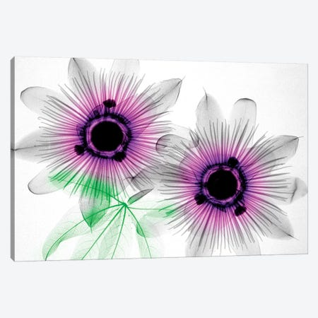 Passion Flowers Canvas Print #HPH13} by Hong Pham Canvas Wall Art