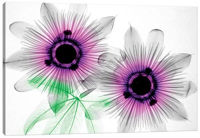Passion Flowers Canvas Art Print