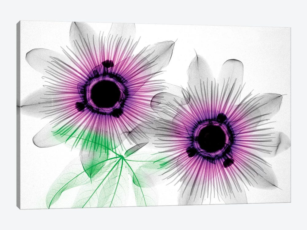 Passion Flowers by Hong Pham 1-piece Canvas Art Print