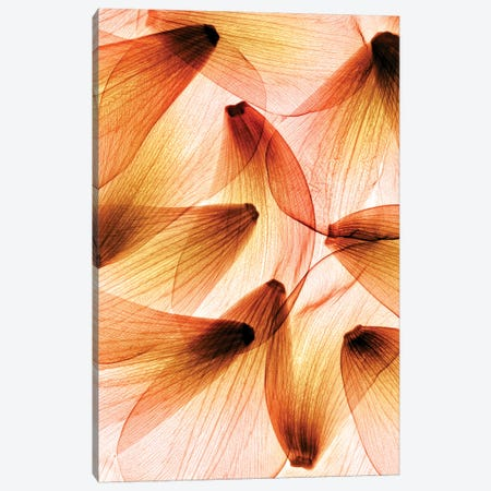 Tulip Petals Canvas Print #HPH17} by Hong Pham Canvas Art Print