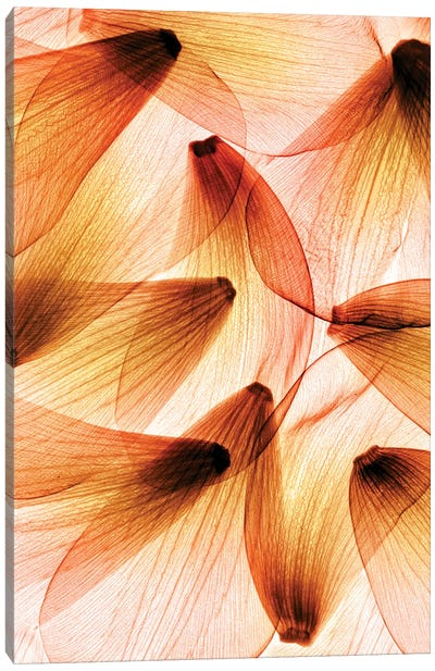 Tulip Petals Canvas Art Print