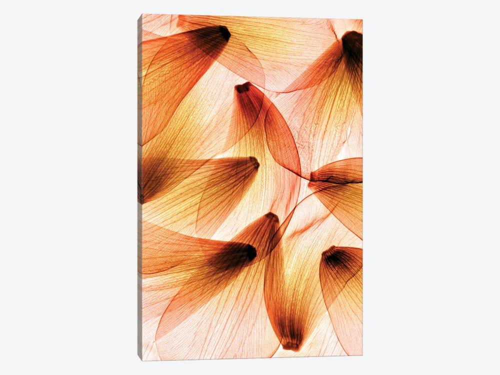 Tulip Petals by Hong Pham 1-piece Art Print