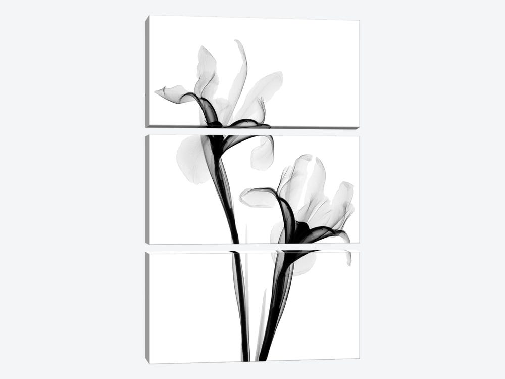 Two Irises I by Hong Pham 3-piece Canvas Artwork