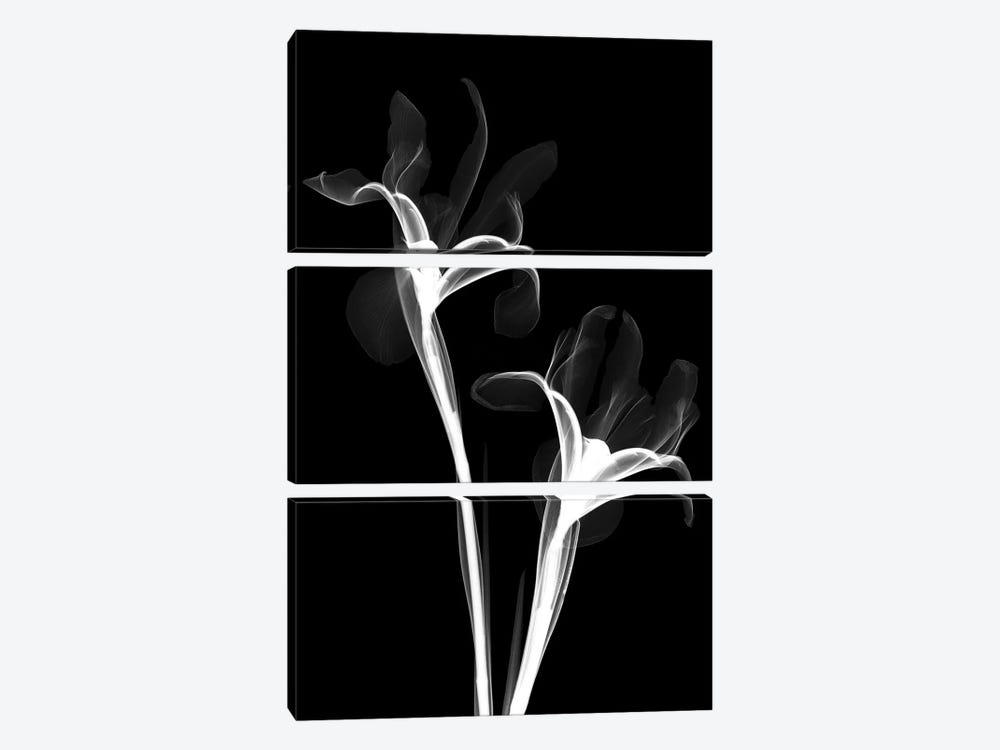 Two Irises II by Hong Pham 3-piece Canvas Art Print