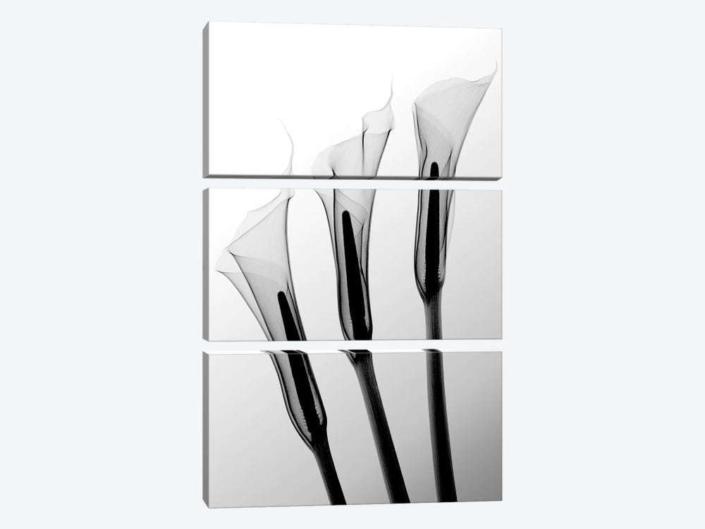 Callas I by Hong Pham 3-piece Canvas Wall Art
