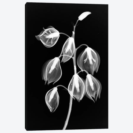 Yucca Inverse Canvas Print #HPH20} by Hong Pham Art Print