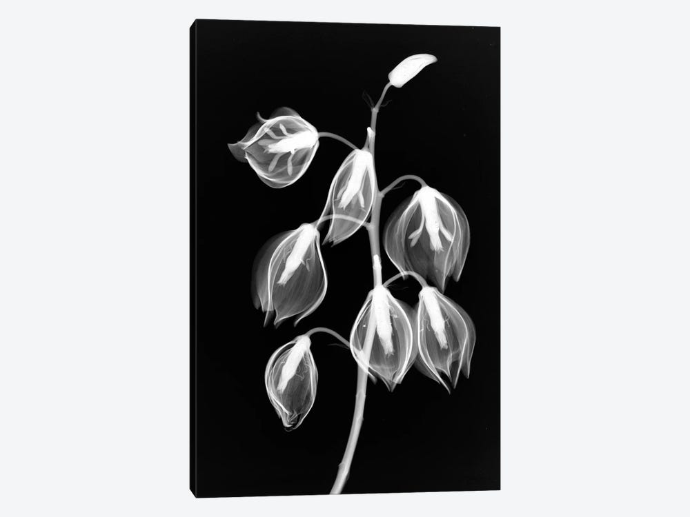Yucca Inverse by Hong Pham 1-piece Canvas Art Print