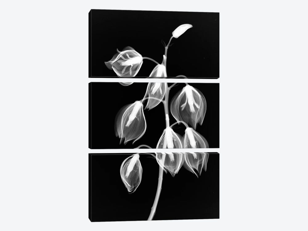 Yucca Inverse by Hong Pham 3-piece Canvas Art Print