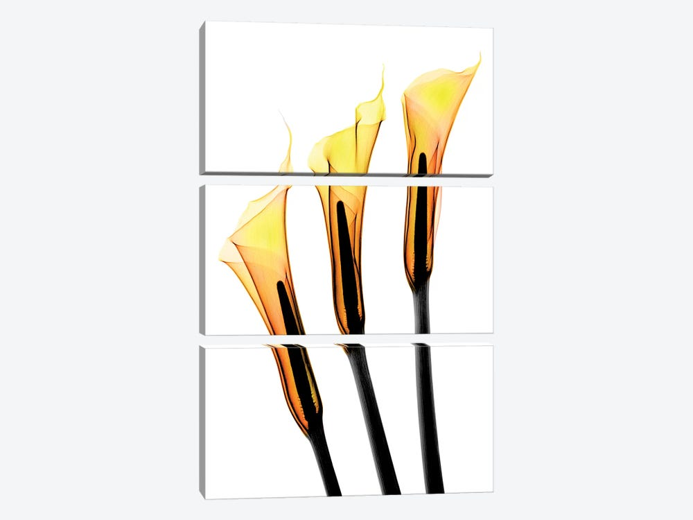 Callas II by Hong Pham 3-piece Canvas Art Print