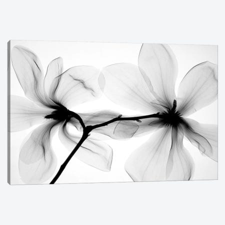 Magnolias I Canvas Print #HPH6} by Hong Pham Canvas Art Print