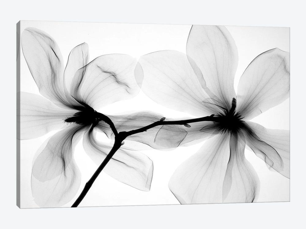 Magnolias I by Hong Pham 1-piece Art Print
