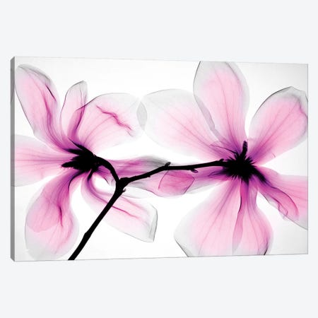 Magnolias II Canvas Print #HPH7} by Hong Pham Art Print