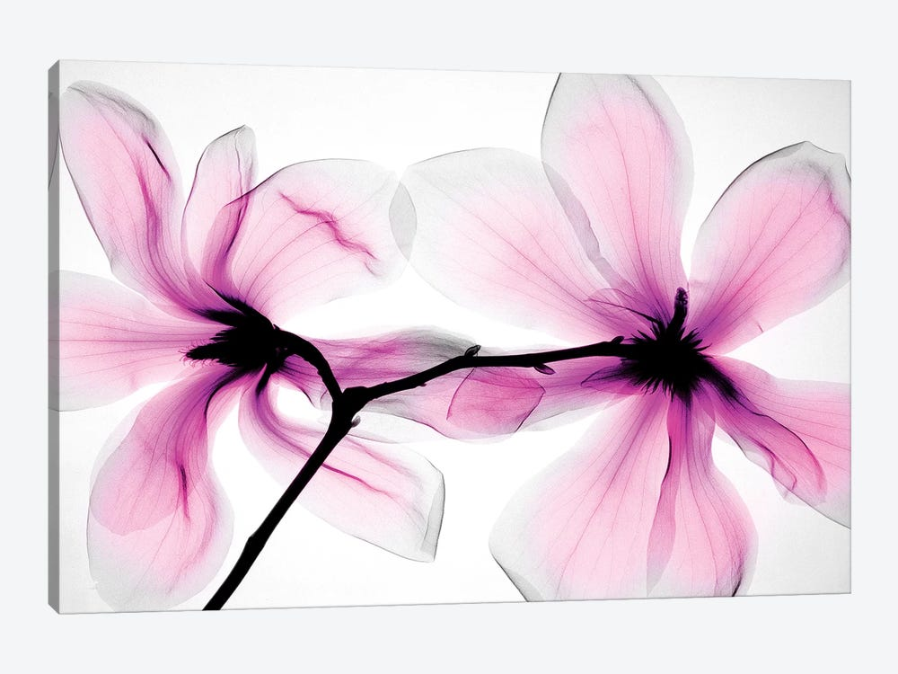 Magnolias II by Hong Pham 1-piece Canvas Art