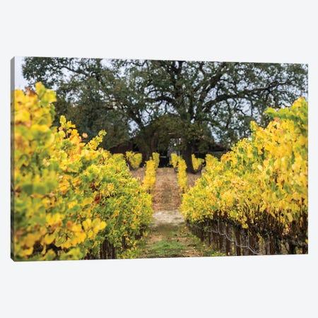 Autumn Vineyard Canvas Print #HRB1} by Heather Roberson Canvas Wall Art