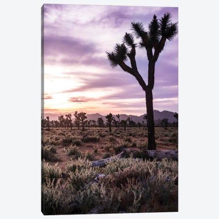 Joshua Tree Sunset II Canvas Print #HRB23} by Heather Roberson Canvas Art