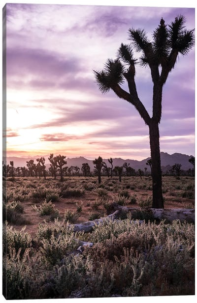 Joshua Tree Sunset II Canvas Art Print