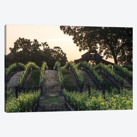 Spring Vineyard Sunrise Canvas Print #HRB28} by Heather Roberson Canvas Art