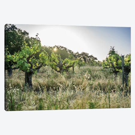 Spring Vines Canvas Print #HRB29} by Heather Roberson Canvas Artwork