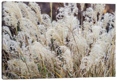Spring Grasses Canvas Art Print