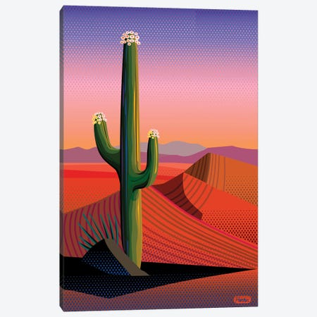 Saguaro Blossom Sunset Canvas Print #HRK152} by Charles Harker Canvas Art Print
