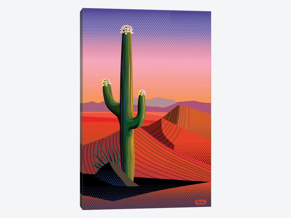 Saguaro Blossom Sunset by Charles Harker 1-piece Canvas Art Print