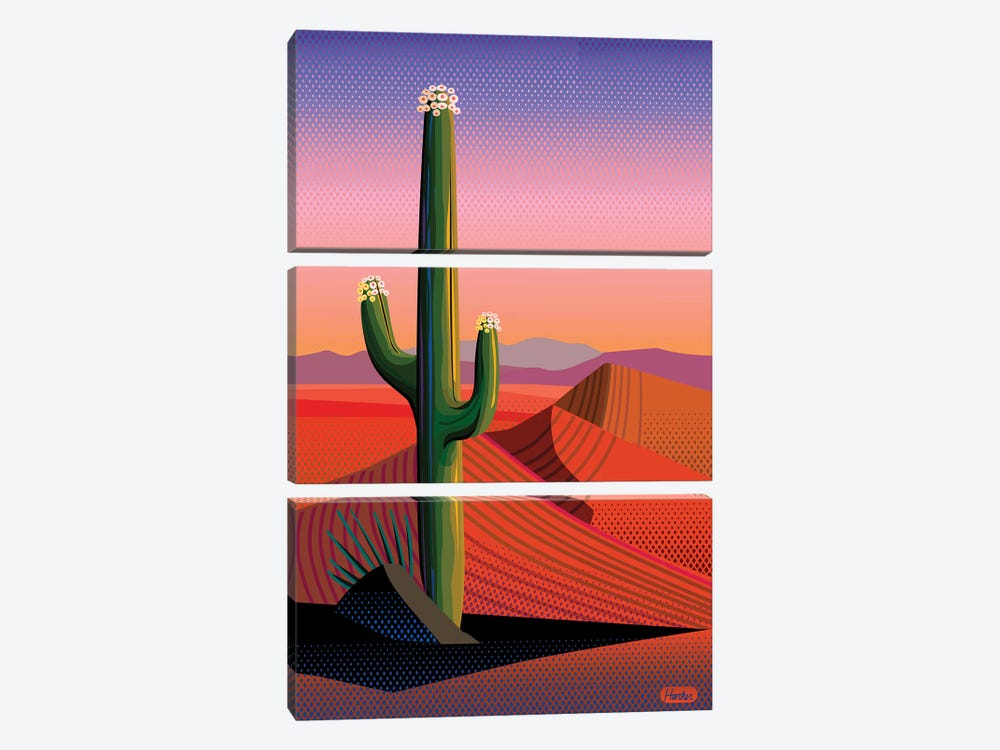 Saguaro Blossom Sunset by Charles Harker 3-piece Canvas Print