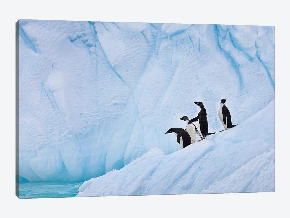 Adélie Penguins, Paulet Island by Hugh Rose 1-piece Canvas Art