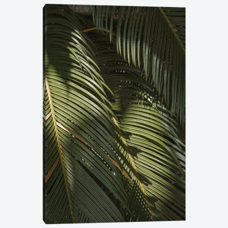 Tropical Palm Leaves Canvas Print #HSK87} by Henrike Schenk Canvas Print