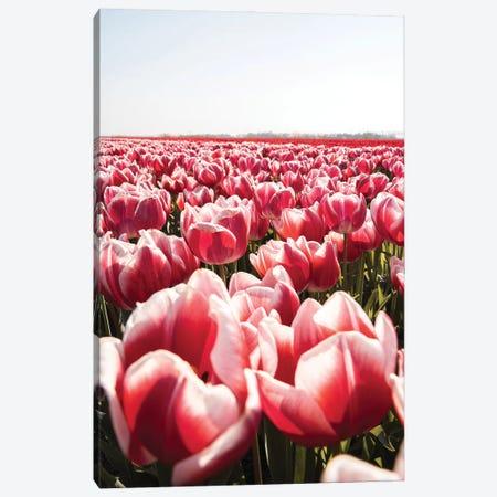 Tulip Field In Holland Canvas Print #HSK94} by Henrike Schenk Canvas Art