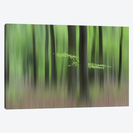 Spring Morning Canvas Print #HUI1} by Huib Limberg Canvas Artwork