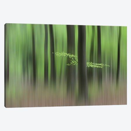 Spring Morning Canvas Print #HUI1} by Huib Limberg Canvas Artwork