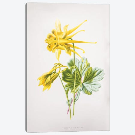 Yellow Columbine Canvas Print #HUL10} by F. Edward Hulme Canvas Wall Art