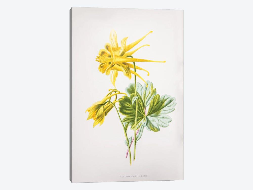 Yellow Columbine by F. Edward Hulme 1-piece Canvas Print