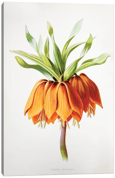 Crown Imperial Canvas Art Print