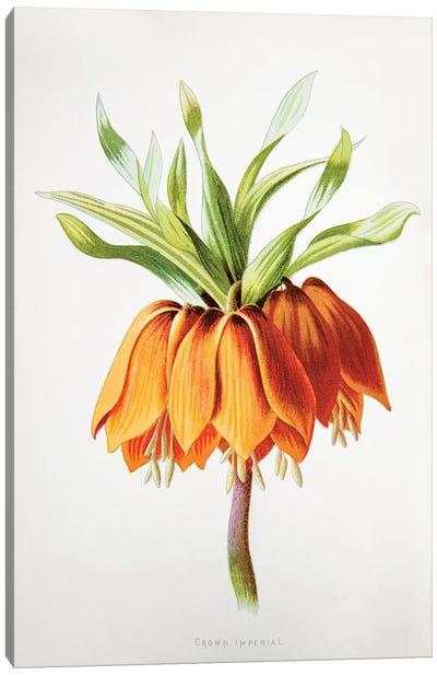 Crown Imperial Canvas Art Print