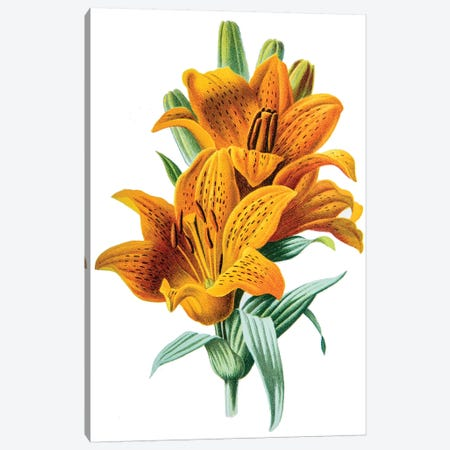 Orange Lily Canvas Print #HUL7} by F. Edward Hulme Canvas Artwork