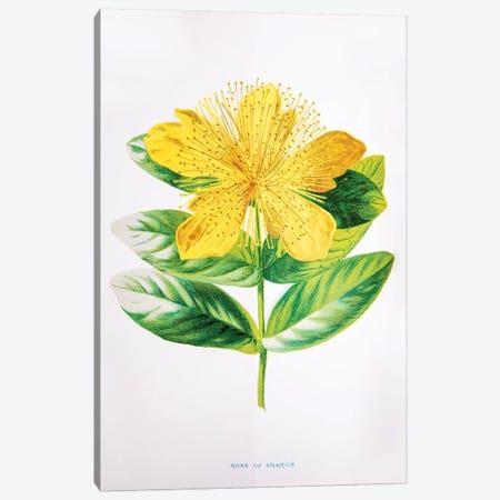 Rose Of Sharon Canvas Print #HUL8} by F. Edward Hulme Canvas Art Print