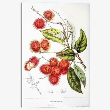 Nephelium Lappaceum (Rambutan) Canvas Print #HVN11} by Berthe Hoola van Nooten Canvas Art