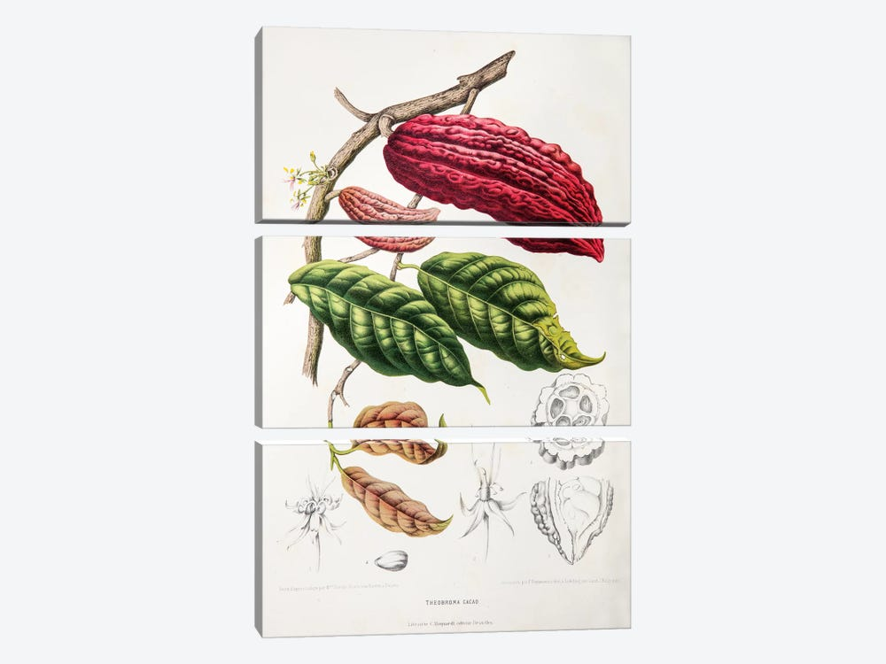 Theobroma Cacao (Cocoa Tree) by Berthe Hoola van Nooten 3-piece Canvas Art