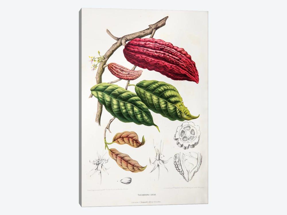 Theobroma Cacao (Cocoa Tree) by Berthe Hoola van Nooten 1-piece Canvas Artwork