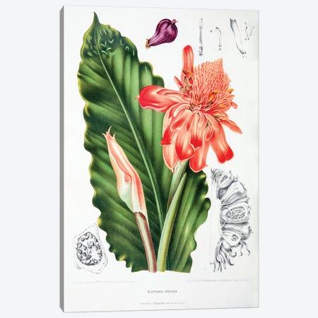 Elettaria Speciosa (Torch Ginger) Canvas Print #HVN7} by Berthe Hoola van Nooten Art Print