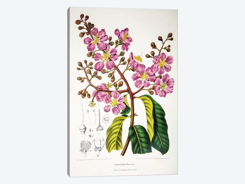 Lagerstroemia Regia (Queen's Crape-Myrtle) by Berthe Hoola van Nooten 1-piece Art Print