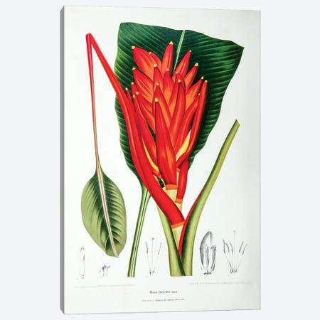 Musa Coccinea (Scarelt Banana) Canvas Print #HVN9} by Berthe Hoola van Nooten Canvas Art