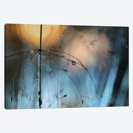 Almost Dark Canvas Print #HWM12} by Heidi Westum Canvas Artwork