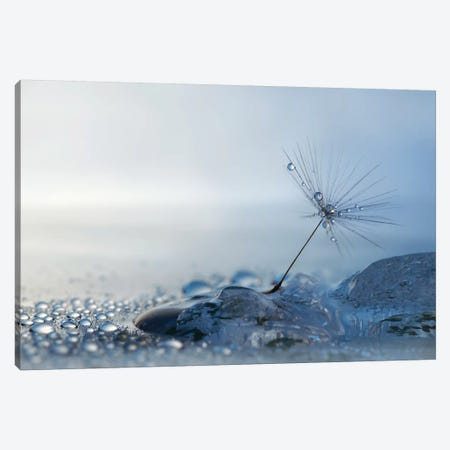 A Blue Morning Canvas Print #HWM1} by Heidi Westum Canvas Art