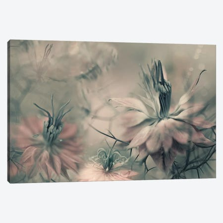 The Virgins Ll Canvas Print #HWM9} by Heidi Westum Canvas Artwork
